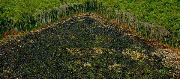 Perù deforestazione